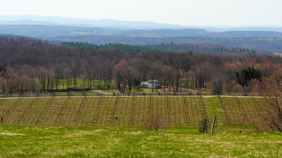 Millbrook Vineyards