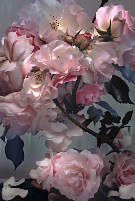 Nick Knight, Rose, 2008. Hand-coated pigment print, 101,4 x 76,3 cm ( 39 7/8 x 30 in. ), Edition of 10, plus 2 AP.