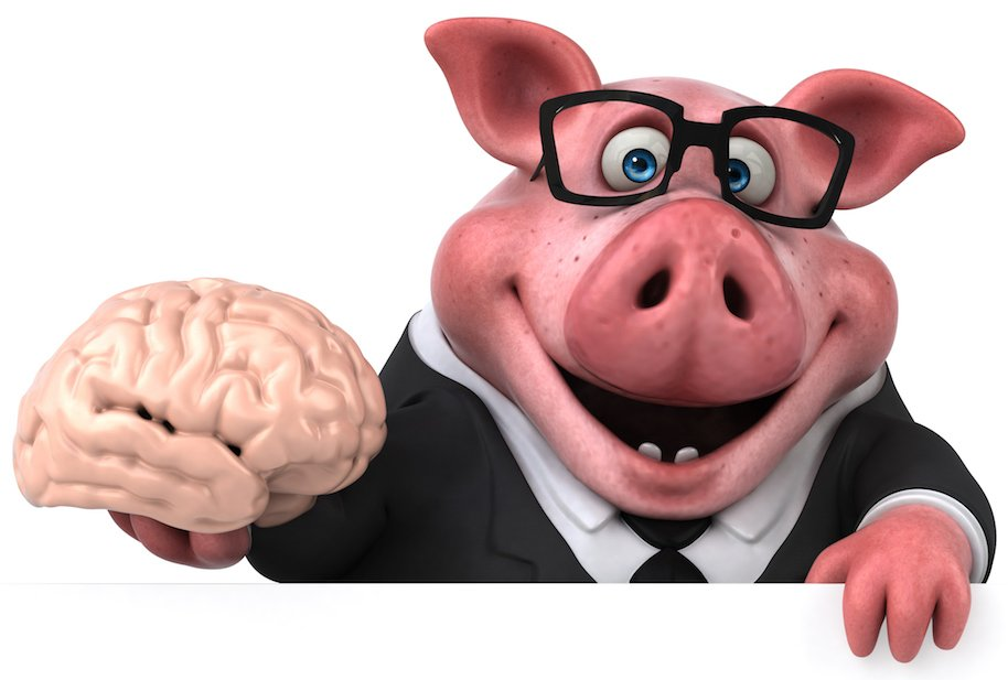 Yale scientists claim pig brains can be kept alive without the body