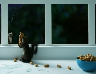 Suspected Burglar In London Home Turns Out To Be A Squirrel