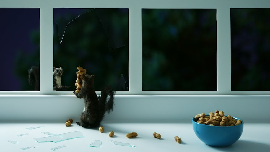 suspected burglar squirrel