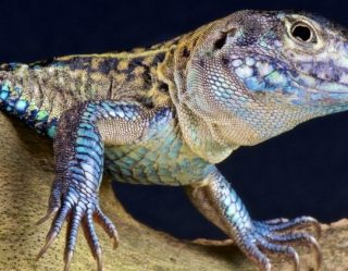 "Iran Accuses U.S. of Using ""Special Lizard"" Spies"