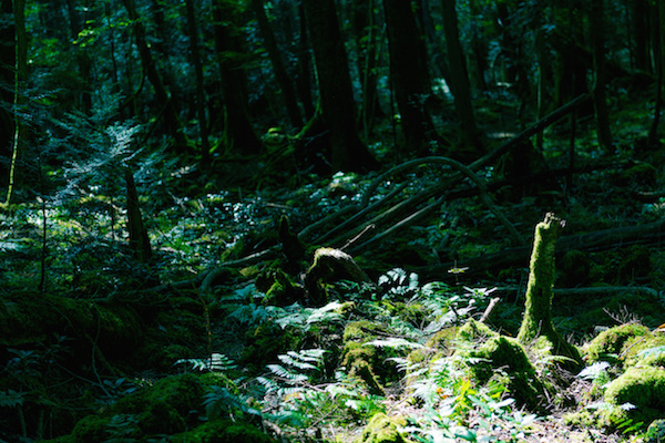 16 People Share The Creepiest Thing To Happen To Them In The Woods