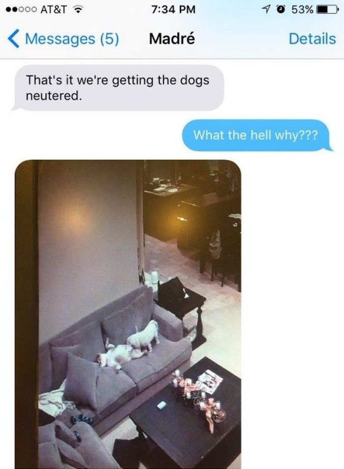dogs1