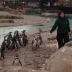 London Zookeeper for a Day