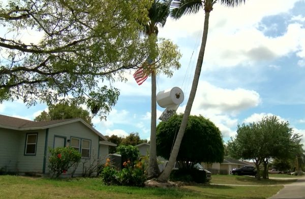 Meanwhile in Florida: Man Hangs Massive Toilet Paper Roll in Tree to Mock America's New Obsession