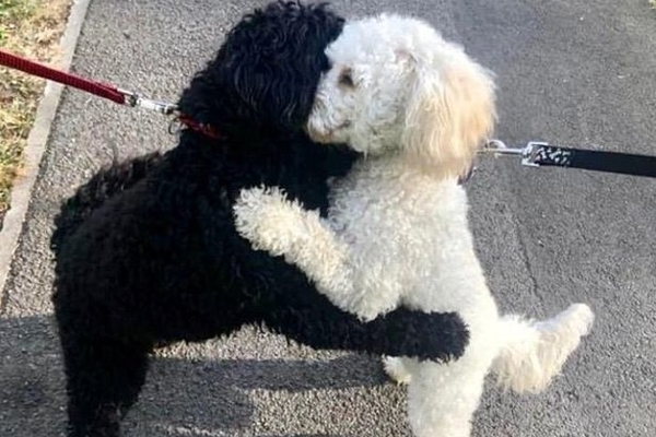 Separated Dogs Run Into Each Other on Walk and Hug After Lockdown, More of This Please