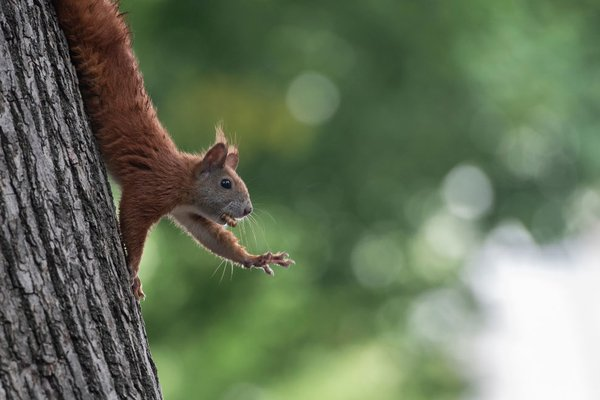 Aww Nuts: Squirrel in Colorado Tests Positive for Bubonic Plague Because 2020